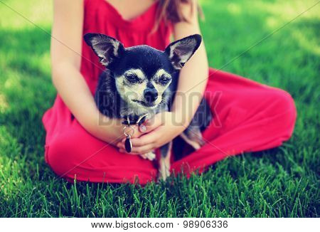 a cute toddler girl with a red dress on holding a chihuahua in the grass in a park or backyard with a green lawn toned with a retro vintage instagram filter effect app or action