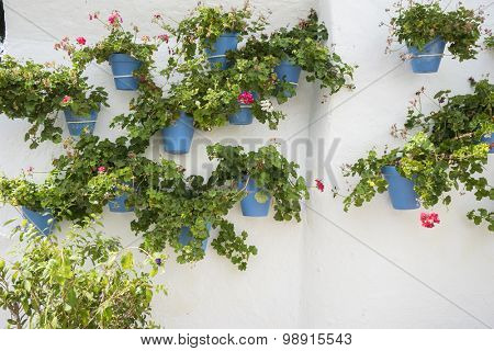 potted plants and flowers on the streets of Marbella, Malaga Spain