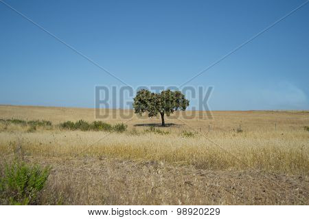 Beautiful Portuguese Landscape with trees and sky