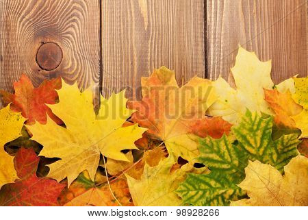 Colorful maple leaves on woden background with copy space