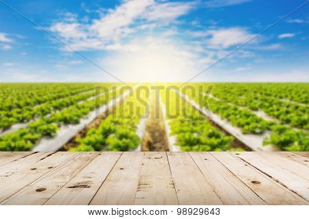 Abstract Blurred Field Lettuce  And Sunlight With Wood Table.