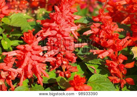 Red Little Flowers