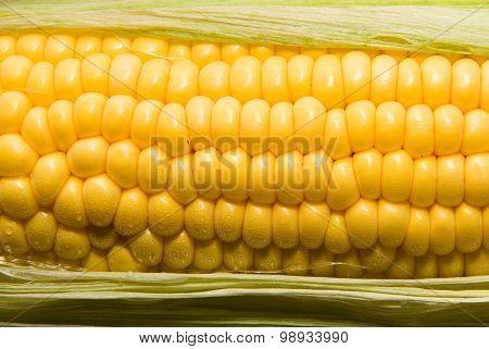 Yellow Ripe Ear Of Corn In Green Leaves
