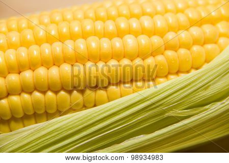 One Ear Of Corn Ripe On A Old Cloth
