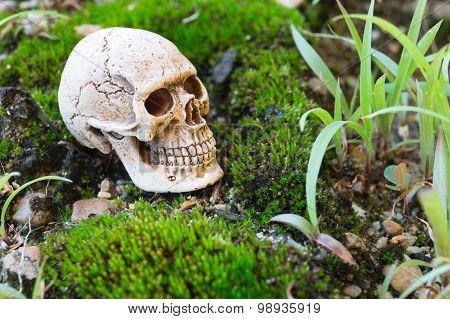 Skull On Moss Wall