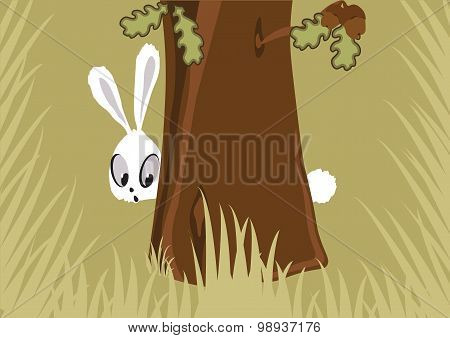 Hare In The Forest