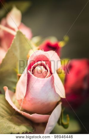 Pink Roses With  Blurred