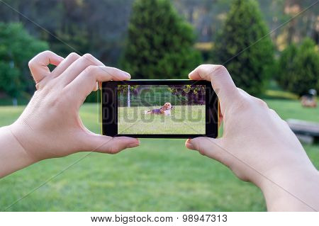 Taking A Picture Of Your Dog