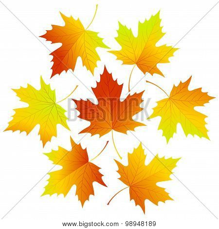 Set fall vector leaves for your design