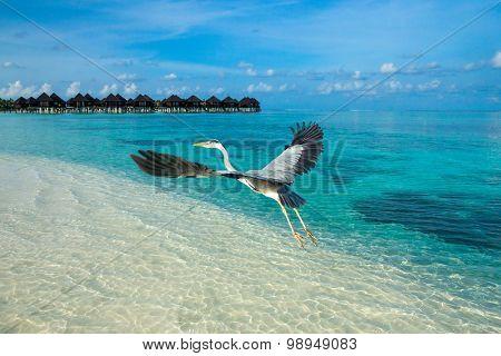 Maldives  and blue lagoon