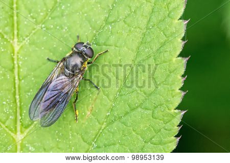 Black Insect Sitting On The Leaf