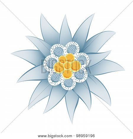 Edelweiss (Leontopodium alpinum) isolated on white background