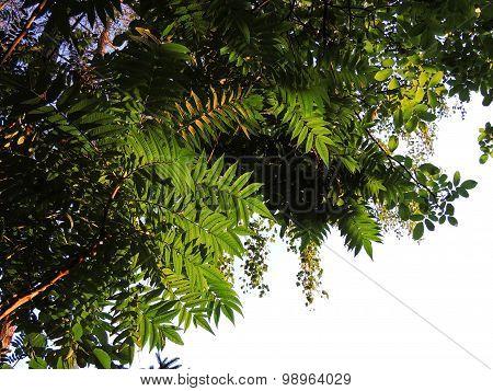 Under Garden Trees