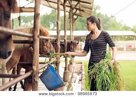 Feeding Ponies