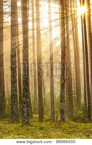 Sunrise in the forest