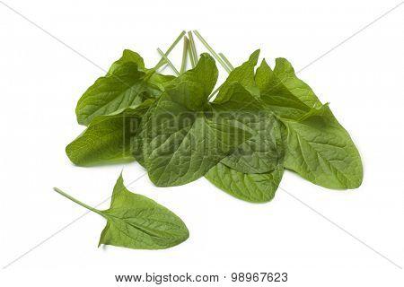 Fresh green Good-King-Henry vegetable leaves on white background