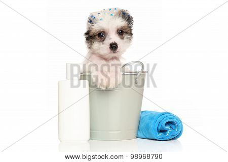 Chinese Crested Dog Puppy In The Bath Bucket
