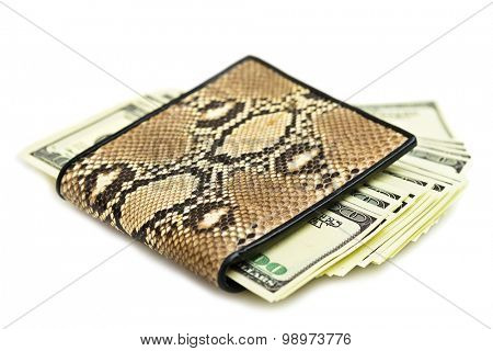 Money in snake leather purse isolated on white background