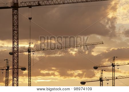 Cranes At Dusk In Warm Tone