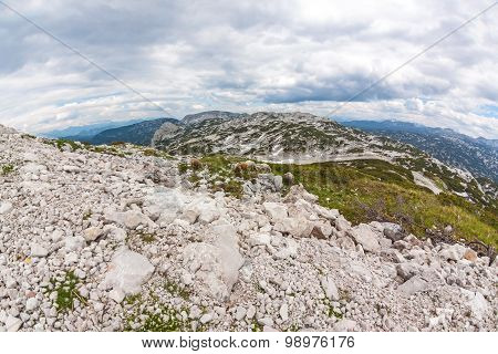 Dachstein Mountains Panorama With Sheep