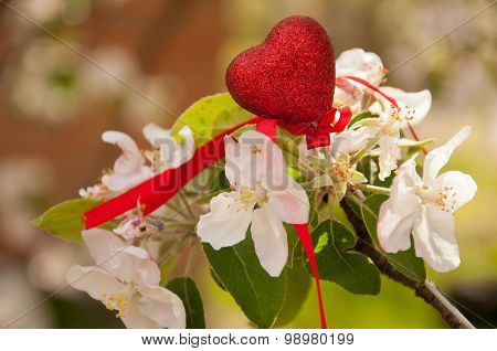 White Apple Spring Blossom And Red Heart