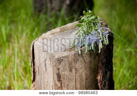 Flower Herb On The Old Wooden Stump