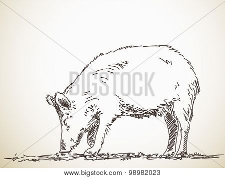Eating pig Vector Sketch Hand drawn illustration