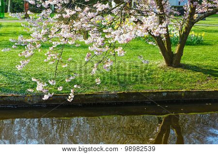 Flowering Tree By The Canal.