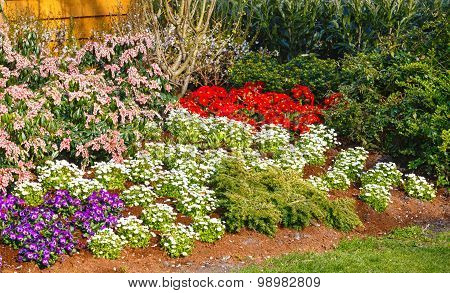 Blossoming Varicolored Flowerbed.