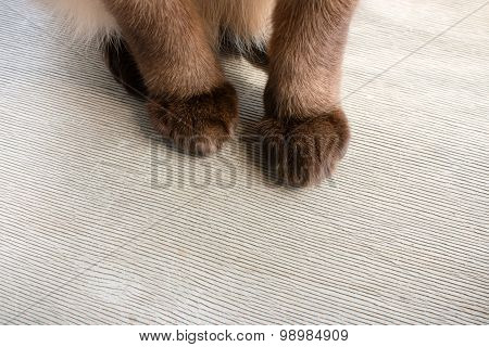 Fluffy Cat Paws On A Wooden Background