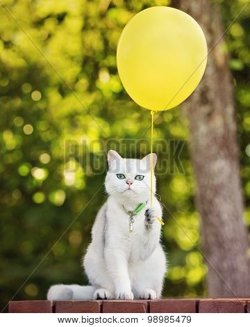 funny cat holding an air balloon