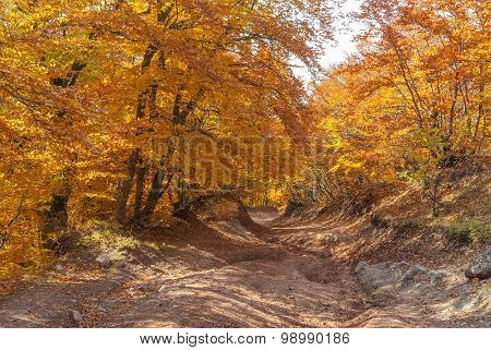 Road in mountain forest at fall season in Crimea