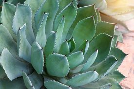 picture of spiky plants  - Macro of succulent plant in the desert - JPG