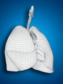 foto of respiratory  - Concept or conceptual anatomical human man 3D wireframe mesh respiratory system  with lungs on blue background - JPG