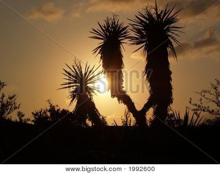 Cacto Sunset