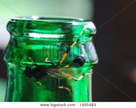 Bug / Insect On A Bottle