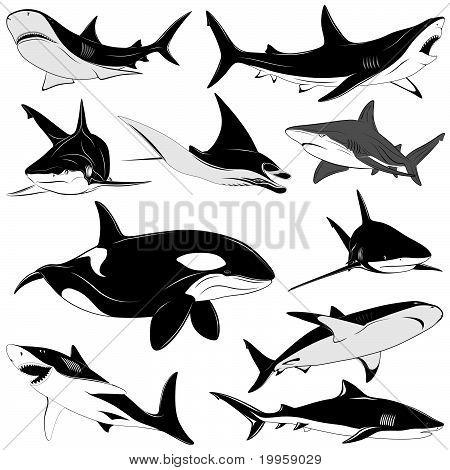 Set of various sharks, tattoo