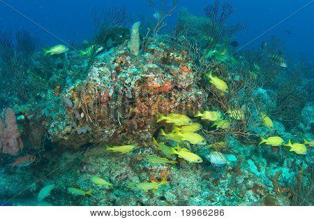 Composición de los arrecifes de coral
