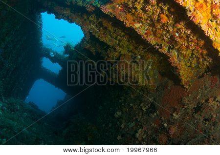 Coral Encrustation