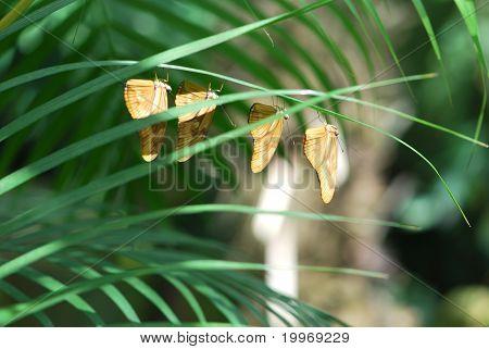 Four Orange Butterflies