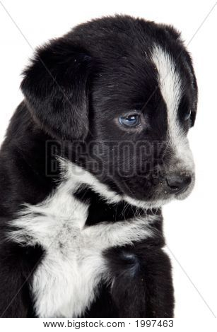 Adorable Small Dog
