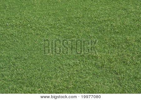 Green, Velvety Grass Turf