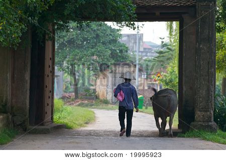 Vietnamese Farmer and Water Buffalo
