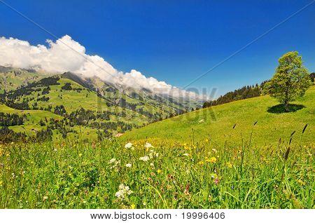 The beautiful Switzerland landscape