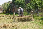 foto of horse plowing  - gathering hay with a machine which was pulled by horses  - JPG