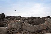 Wild Sea Lion Resting On Rocks