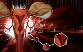 image of fimbriae  - Digital illustration of  Uterus  in  colour  background - JPG