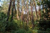 Autumn Forest. Autumn Trees. Ecology Forest. Evergreen Forest Woods poster