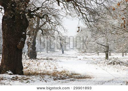 Winter Landscape Of Richmond Park