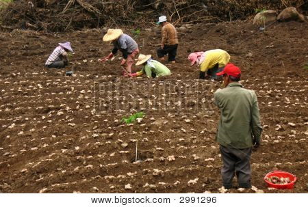 Aboriginal Farmworkers